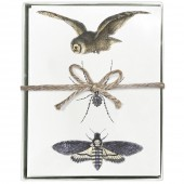 Owl Spider Moth Greeting Cards S/8