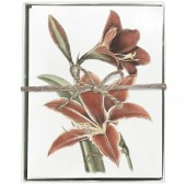 Amaryllis Greeting Cards S/8