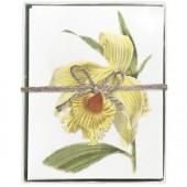 Daffodil Boxed Greeting Card