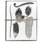 Feathers Boxed Greeting Cards (Blank)