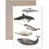 Sea Mammals Greeting Card