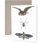 Owl Spider Moth Greeting Cards
