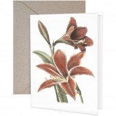 Amaryllis Greeting Cards
