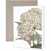Hydrangea Greeting Card Blank